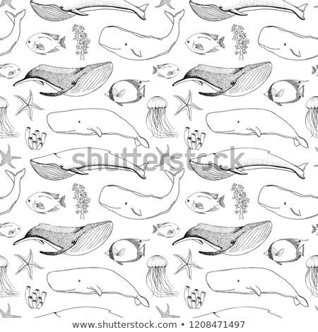 deniz · karalamalar · siyah · beyaz · el · balık - stok fotoğraf © arkadivna