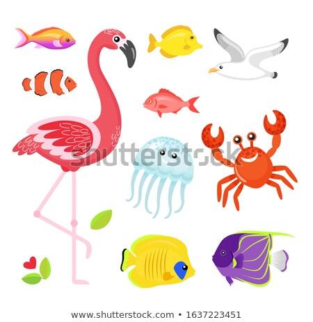 flamingo and jellyfish seagull and crab animals stock photo © robuart