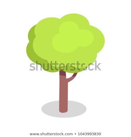 Zielone dąb brązowy odizolowany biały Zdjęcia stock © robuart