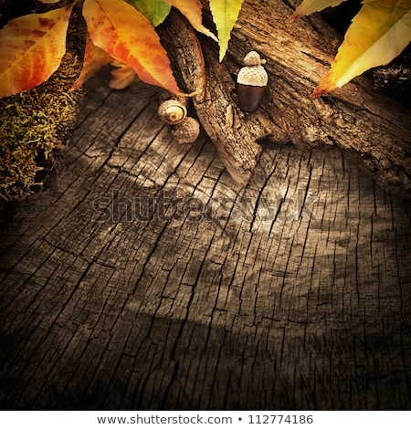 Bright Autumn Leaves On The Abstract Background With Wooden Fram Photo stock © mythja