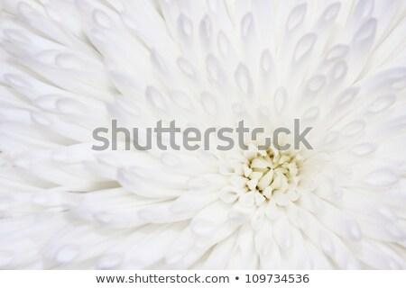 Zachte heldere witte Geel ander planten Stockfoto © bobkeenan
