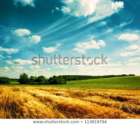 idylle landscape of country green field  Stock photo © experimental