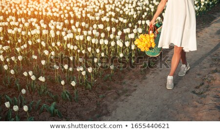 высушите Tulip области цветок весны аннотация Сток-фото © Kuzeytac