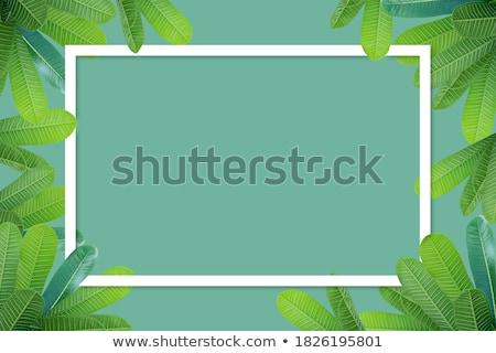 Color Frangipani Frame Stock photo © adamson