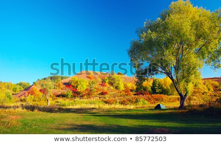 huge tree with small tent stock photo © gewoldi