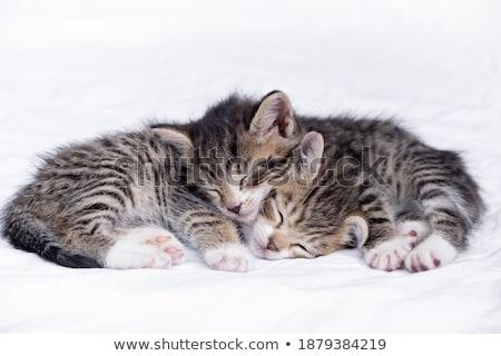 cute · pasgeboren · baby · teddybeer · deken · bed - stockfoto © juniart