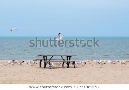 19 plaj su deniz kuş kaya Stok fotoğraf © LianeM
