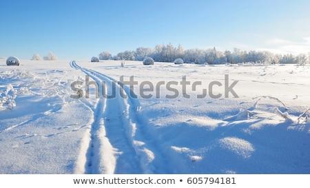 fagyott · széna · hideg · nap · tél · víz - stock fotó © ElinaManninen