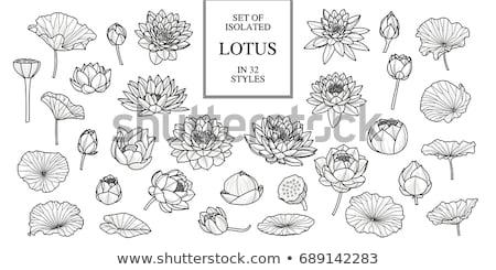 Lotus leaf Stock photo © zzve