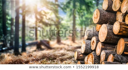 Pine Timber Logs Stacked in Pine Forest Stock photo © tainasohlman
