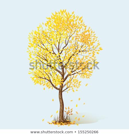 Ostatni żółty pozostawia parku późno jesienią Zdjęcia stock © ultrapro