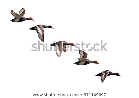 repülés · Saskatchewan · Kanada · kék · ég · természet · tó - stock fotó © elenarts