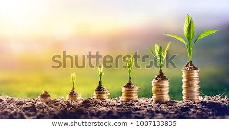 Pénz növekvő bankjegyek virágcserép izolált fehér Stock fotó © natika