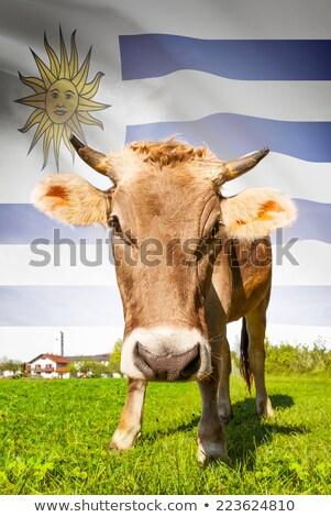 молочная фермы Уругвай дерево природы Сток-фото © xura