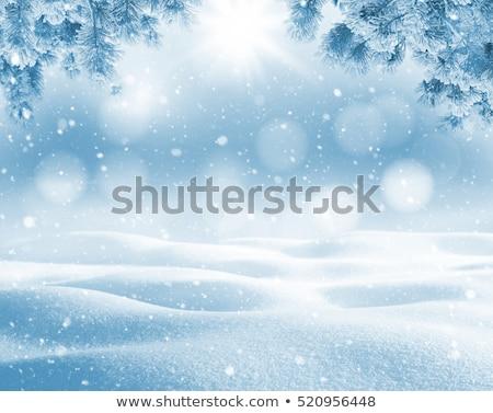Fir twigs and snow background Stock photo © Smileus