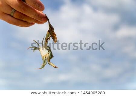 Mãos caranguejo blue sky céu água fundo Foto stock © aza