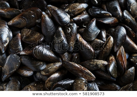 fresh alive mussels  Stock photo © tangducminh