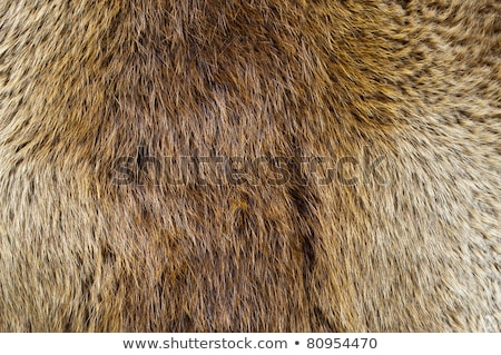 ビーバー 毛皮 ブラウン テクスチャ 画像 髪 ストックフォト © pancaketom