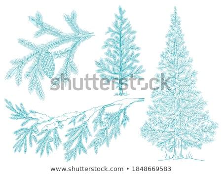 冷ややかな 白 表 ツリー 雪 ストックフォト © HASLOO