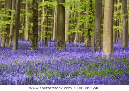 Tapete cobertor vibrante antigo madeira paisagem Foto stock © paulfleet