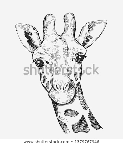 A sketch of a giraffe Stock photo © bluering