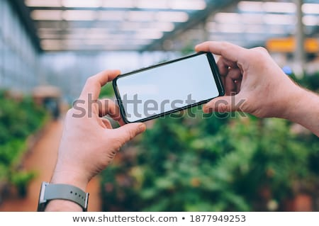 Male holding smartphone in his hand.And background of nature outdoor and sunshine view. stock photo © Bigbubblebee99