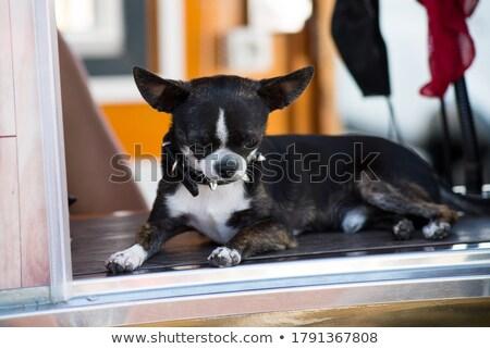 Kicsi fekete kutyakölyök ül ablak néz Stock fotó © Klinker