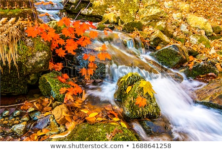 autumn leaves in river stock photo © backyardproductions