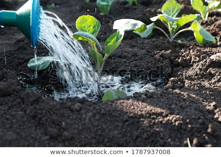 Seedling in can Stock photo © IS2
