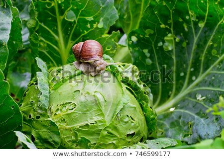 Agricultural Pest Damage Stock photo © Lightsource