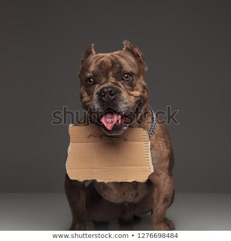 愛らしい アメリカン カートン にログイン 周りに 首 ストックフォト © feedough