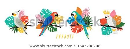 Papegaai illustratie jungle bloem gras groene Stockfoto © colematt