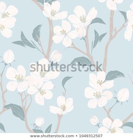 Cherry blossom on beige background Stock photo © furmanphoto