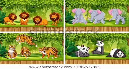 набор животного джунгли иллюстрация лес природы Сток-фото © bluering