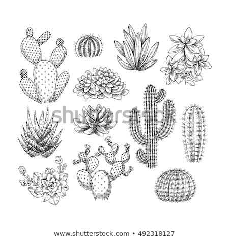 aranyos · kézzel · rajzolt · kaktusz · szett · nedvdús · virág - stock fotó © marish