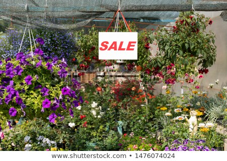 Sale announcement on sheet of paper hanging over variety of flowers Stock photo © pressmaster