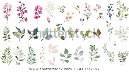 set · vettore · acquerello · fiori · foglie · bianco - foto d'archivio © Artspace