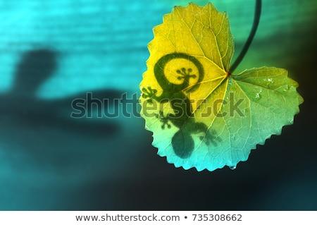 ストックフォト: Green Jungle Leaf And Gecko