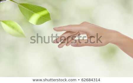 Close-up of woman touching leaf Stock photo © photography33