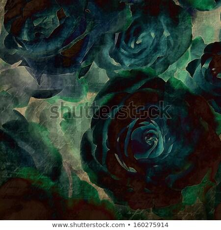 Rózsák gyep virág textúra absztrakt természet Stock fotó © konradbak