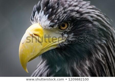 siyah · beyaz · sığ · doğa · kuş · tüy - stok fotoğraf © billperry
