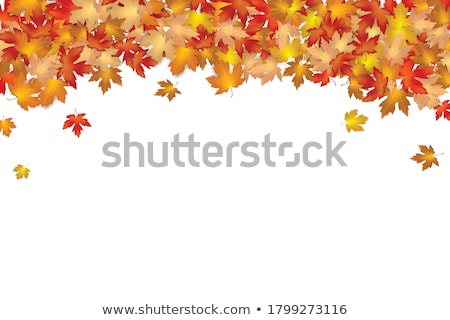 autumn dry leaf of red oak tree stock photo © shutswis