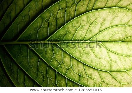 флора цветок дизайна лист фон обои Сток-фото © zzve