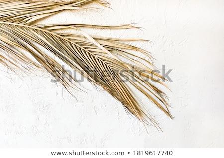 Desert with a golden leaf Stock photo © bbbar