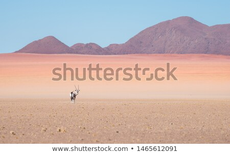 Lone Oryx Stock photo © ottoduplessis
