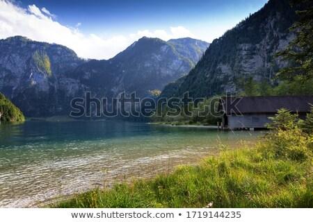 kép · gyönyörű · tájkép · köd · fű · erdő - stock fotó © magann