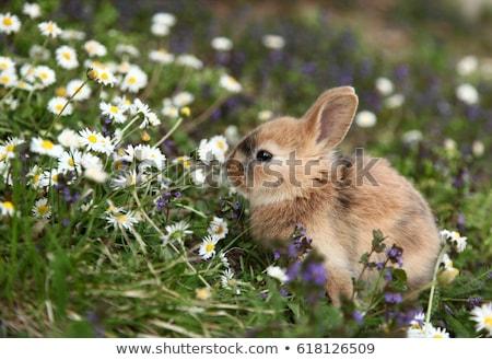 cute · bebé · mascota · vacaciones · conejo · gris - foto stock © lightpoet