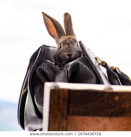 paarden · boerderij · huis · natuur · paard - stockfoto © castenoid
