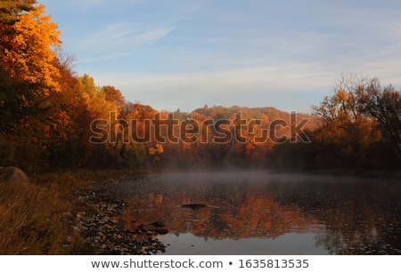 Outono névoa colorido floresta folhas madeira Foto stock © chris2766