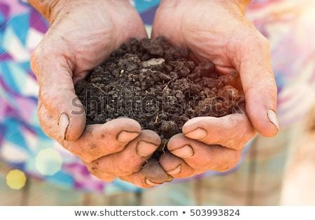 Föld kezek felelős gazda közelkép szelektív fókusz Stock fotó © stevanovicigor